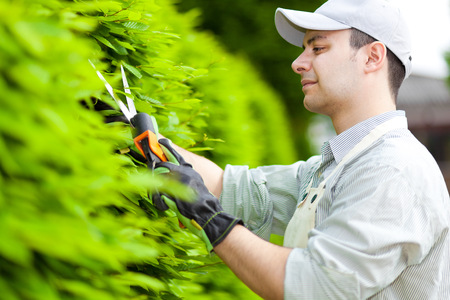 bush trimming: Professional gardener pruning an hedge Stock Photo