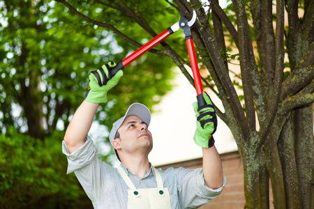 나무를 가지 치기 전문 정원사 스톡 콘텐츠