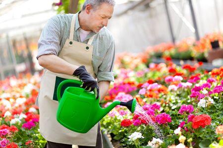flower nursery: Portrait of a greenhouse worker watering plants