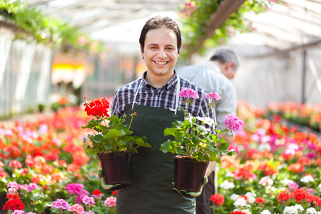 in the greenhouse: Green house employee holding flowers