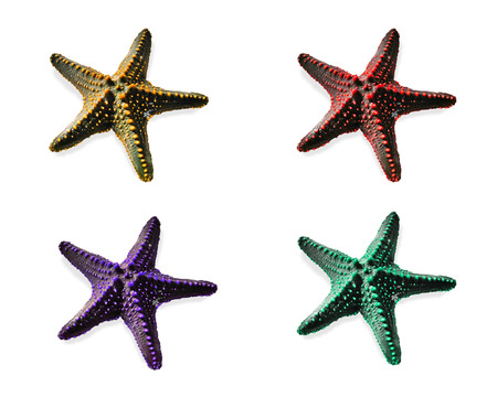 Starfish shell isolated different colors on white background