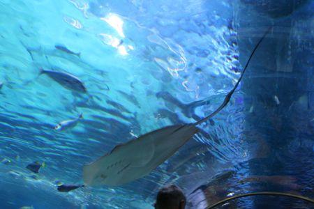 under the Manta