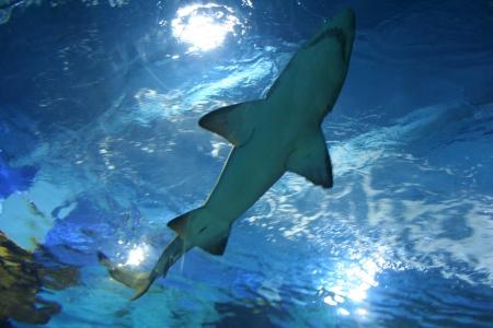 dans le cadre du requin Banque d'images