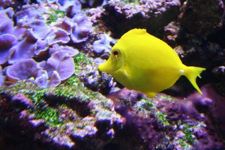 exotic fish: Pesci esotici pesce angelo Archivio Fotografico