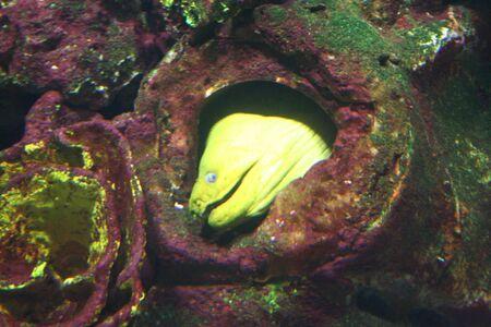 exotic fish: Peces ex�ticos, muraenas