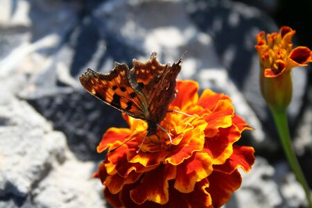 butterfly over targetes flower photo