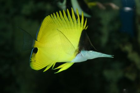 exotic fish photo