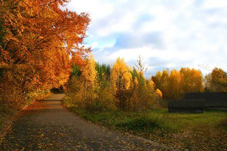Paysage d'automne, belle nature vivante