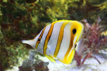angel fish photo
