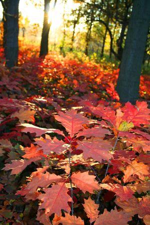 Leaf in Autumn Landscape, beautiful vivid nature