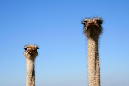 supervision: Ostrich. Supervision system