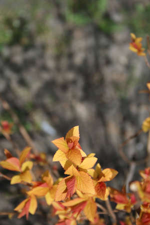 the offspring: Hermosa descendencia. Oto�o de colores de la primavera. Ciclo de vida. Naturaleza. Al aire libre Foto de archivo