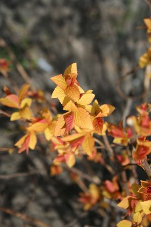the offspring: Beautiful descendencia. Oto�o de colores de la primavera. Ciclo de vida. Naturaleza. Al aire libre
