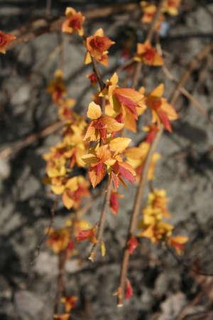 hijos: Hermosa descendencia. Oto�o de colores de la primavera. Ciclo de vida. Naturaleza. Al aire libre Foto de archivo