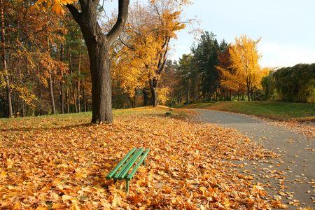 ruelle dautomne en parc de ville