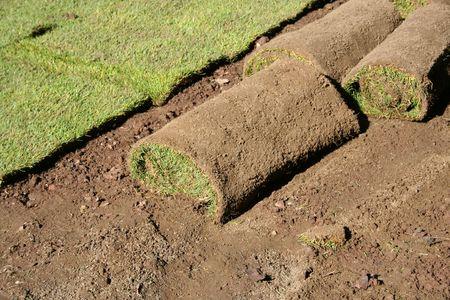 Lawn in the rolls. Garden design