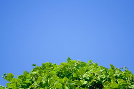 Green earth lgobe over the blue sky. Ecology concept. Stock Photo