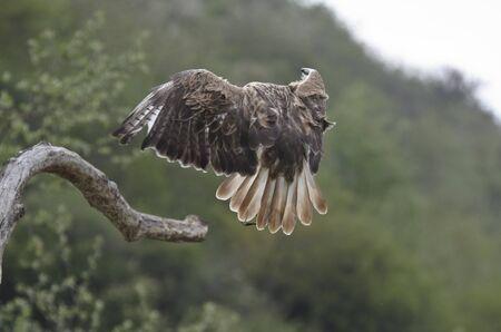 Eagle Stock Photo - 13702873