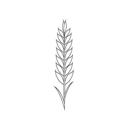 Minimalistic wheat line icon. Simple barley, weat, rice outline vector illustration. Linear Wheat isolated on white background. Farm and Bakery symbol 向量圖像