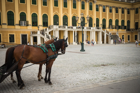 schonbrunn palace: Carriage horses at the beautiful Schuenbrunn Square Stock Photo