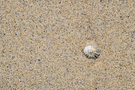 shell on the Oldshoremore sand beach, Scotland