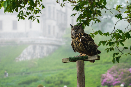 An owl in the  gardens, Scotland