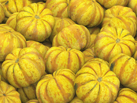 dietary fiber: Pile of sweet dumpling squash under neutral studio lighting. This image is 3d illustration.