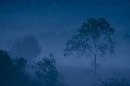 Morning fog in a wild tropical rainforest in  national park, Thailand