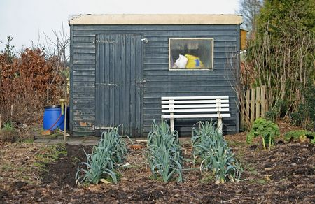 veganism: Allotment with shed and rows of leek