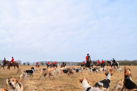 Drag hunting with foxhounds