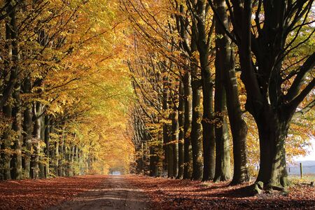 Autumn lane in the forest, Drenthe, The Netherlands photo