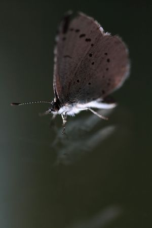 speckle: Butterfly on reflecting surface