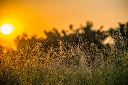 light green background: grass in evening Stock Photo