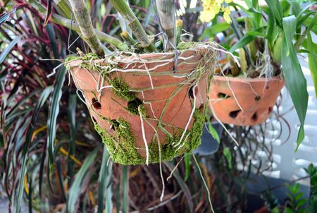 vintage jardiniere of orchid photo