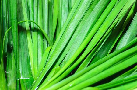 ramosum: Fresh Leek