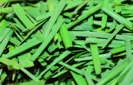odorum: Fresh Leek