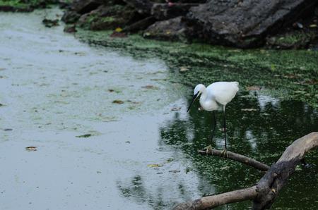 White Crane photo