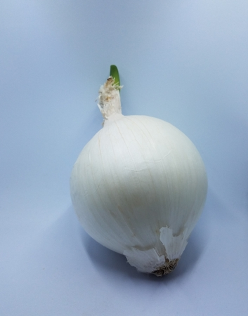 white onion with green sprout growing on white background