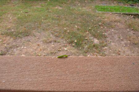 green caterpillar walking on brown wood railing