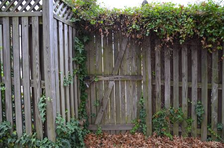 wood gate and fence with vines and carpenter bee holes and leaves
