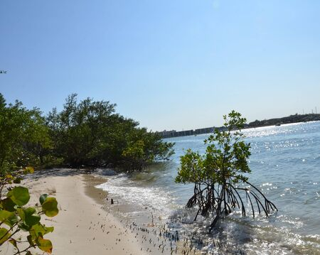 mangrove tree roots and water and sand on a shore in Florida Stok Fotoğraf