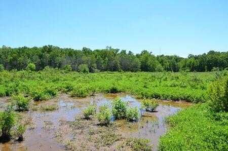 green plants in water with mud in wetland 版權商用圖片