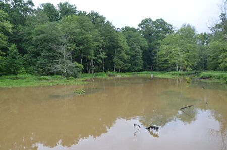 large crane birds on log and murky lake water 版權商用圖片