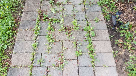 stone tile path or trail with weeds in the cracks