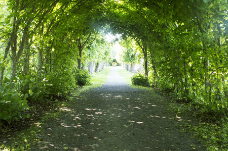 Green Tunnel Hedgerow