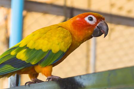 macaw: macaw sitting