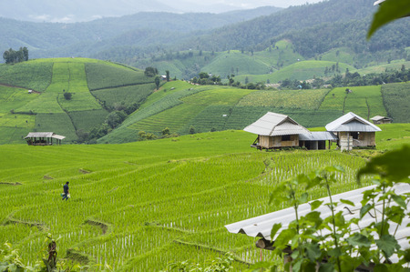 pa: Beautiful rice terraces at Ban Pa Pong Pieng, Mae chaem, Chaing Mai, Thailand.