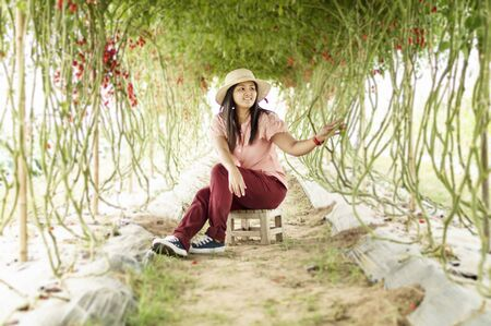 Young woman in a greenhouse with tomatoes, harvesting.Enjoying in her garden. Stock fotó