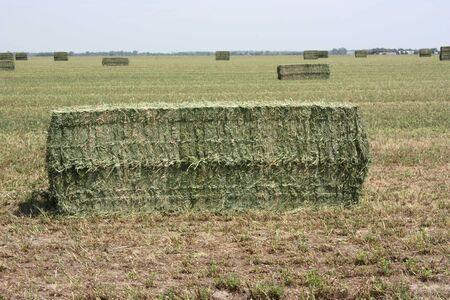bale: hay in the field Stock Photo