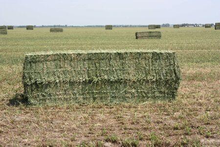 hay field: hay in the field Stock Photo